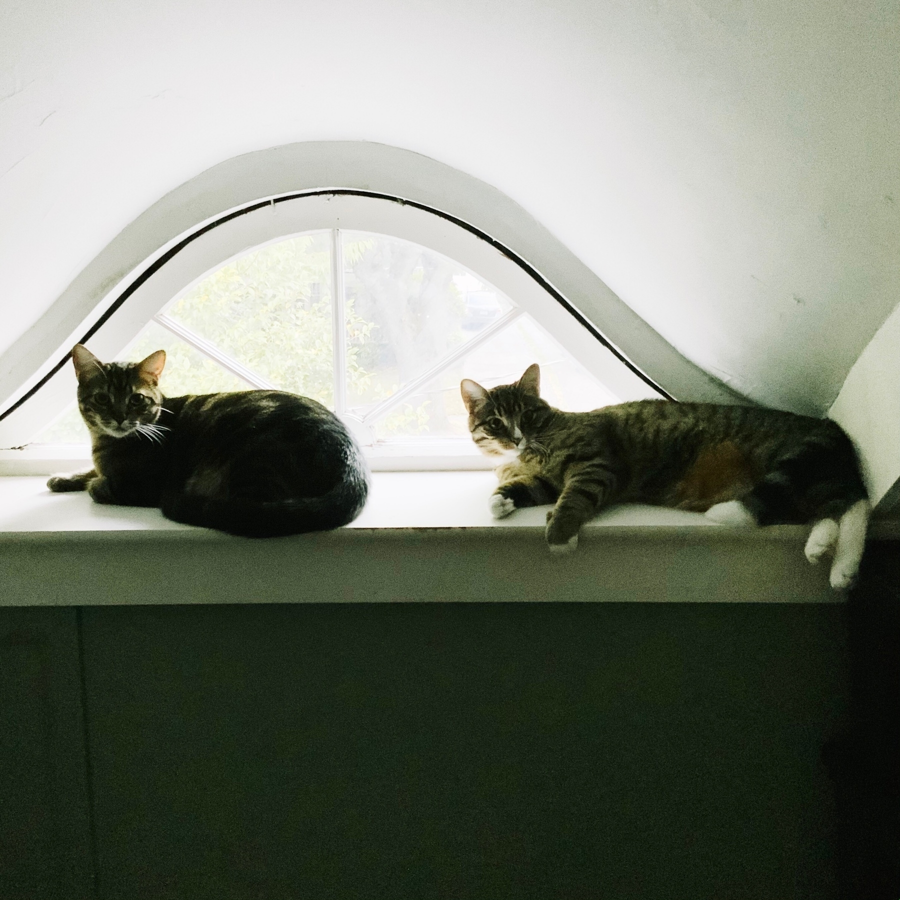 Tabby kittens in a window.