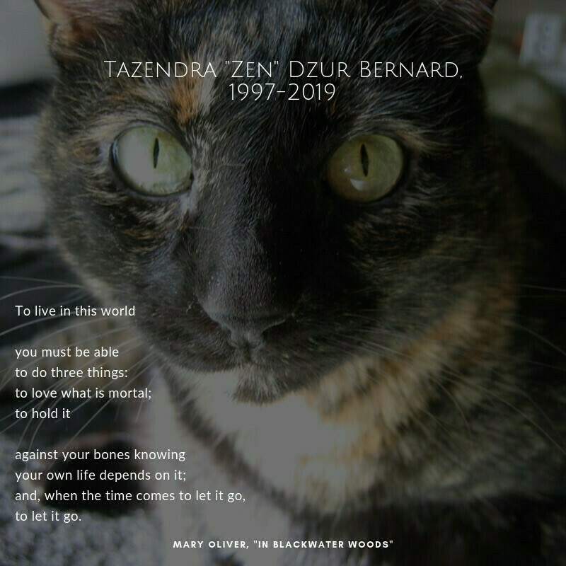 """photo of a tortoiseshell cat with an excerpt of Mary Oliver's poem """"In Blackwater Woods"""" over it"""