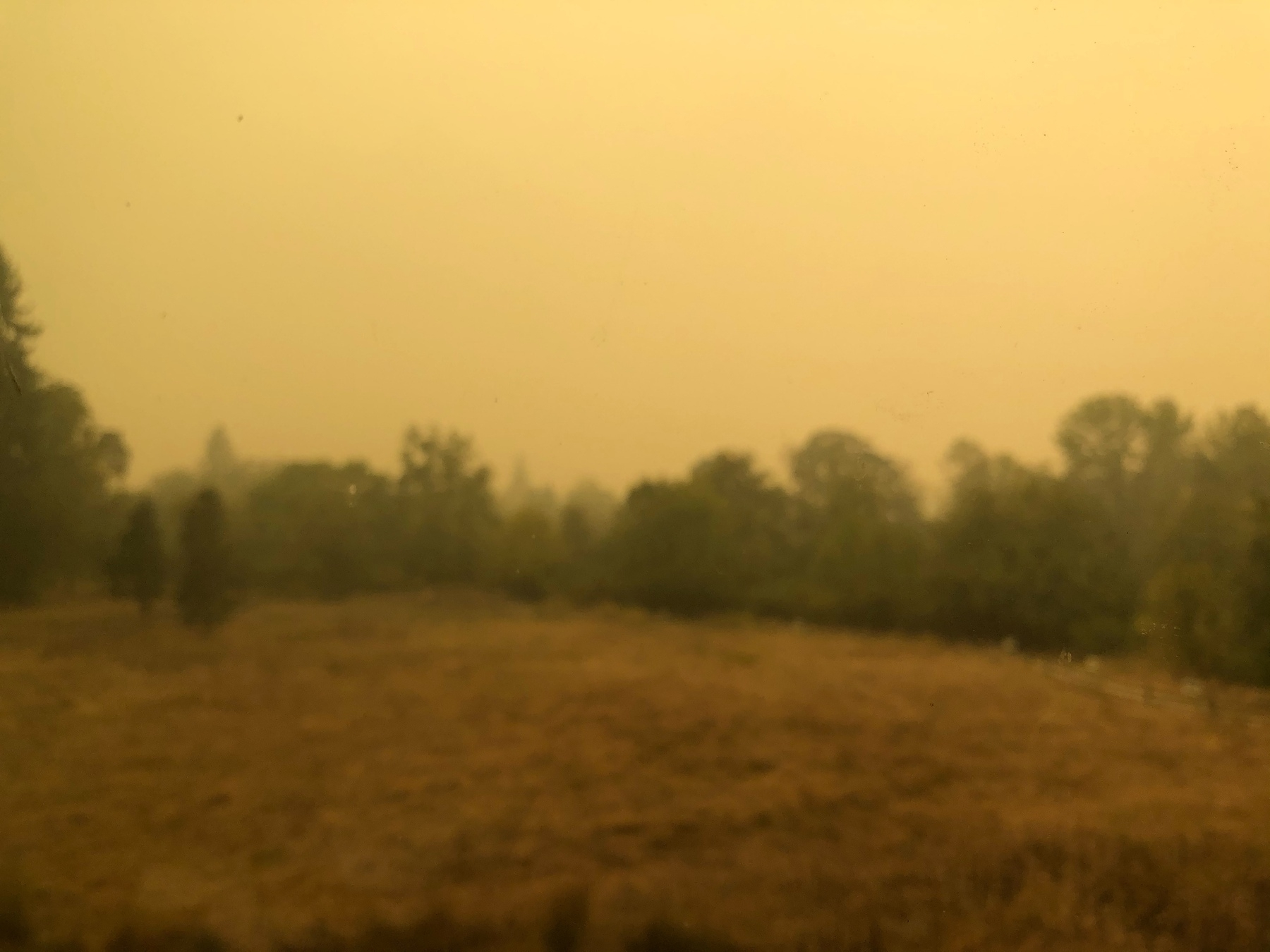 Blurry photo of a dry brown field surrounded by trees and a yellow sky.