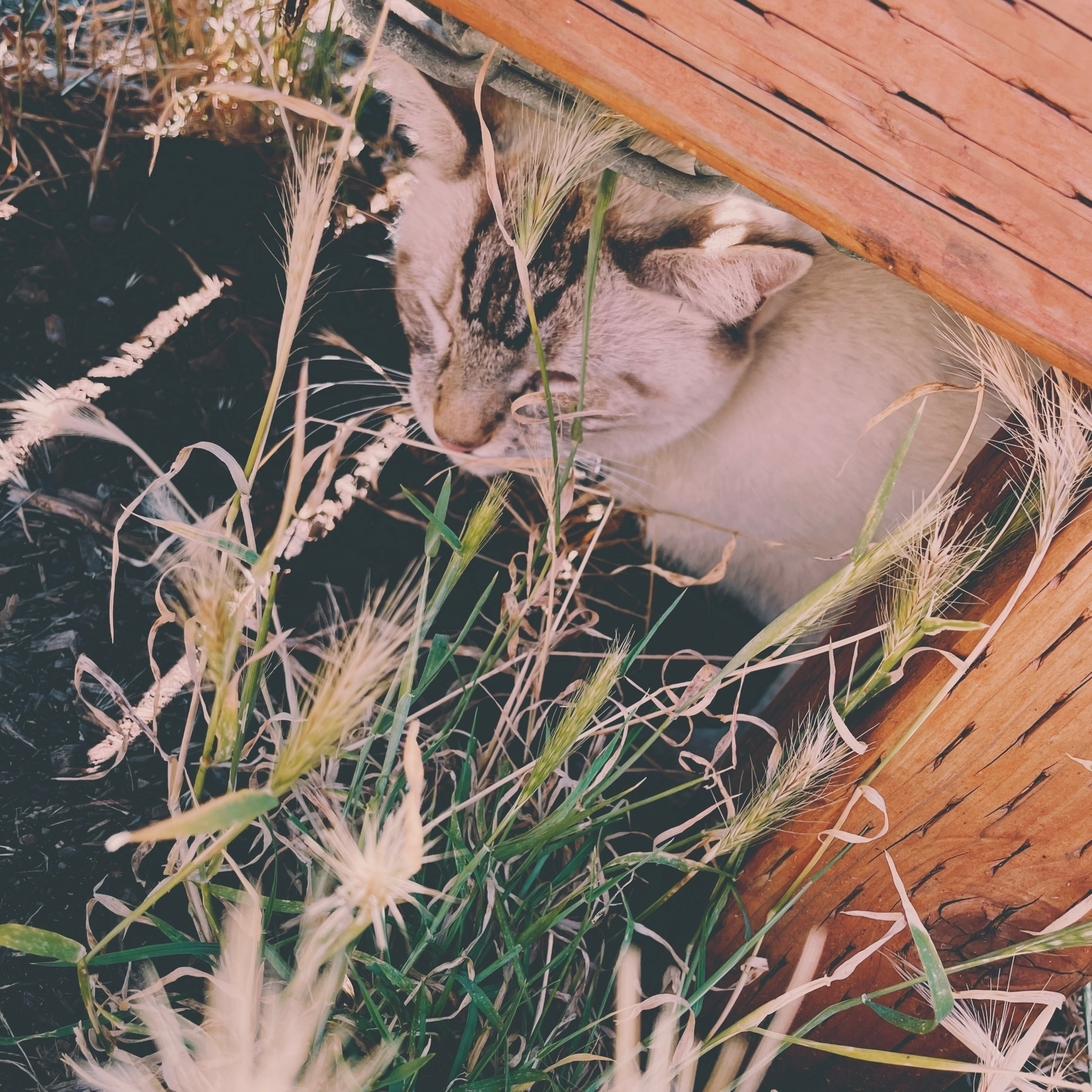 cat under a wooden bench among wild grasses